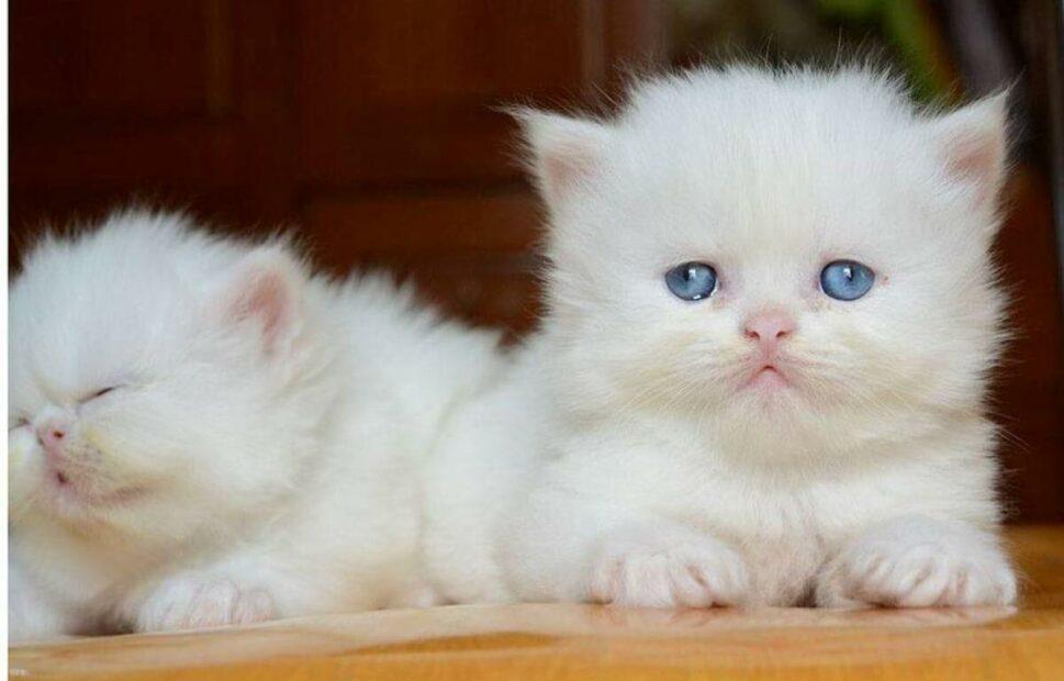 Kinh nghiệm về cách nuôi mèo con từ lúc mới đẻ đến trưởng thành
