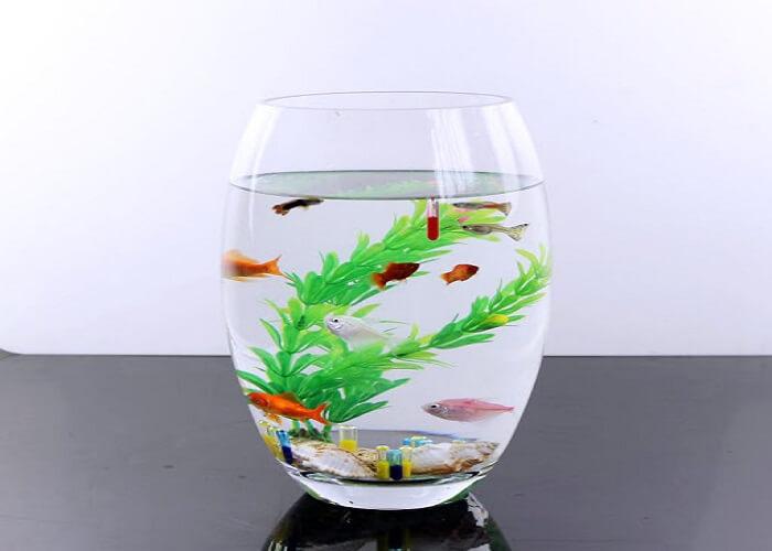 Bể cá mini hình bầu dục khá nhỏ gọn