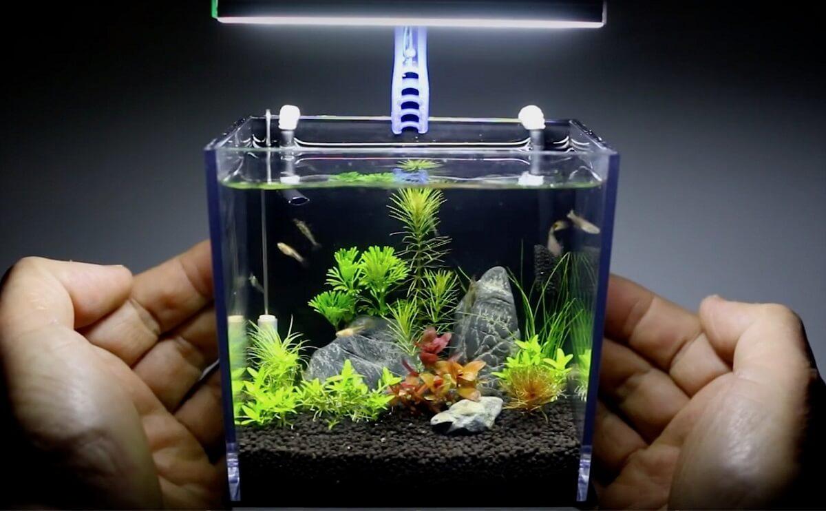 Những loại bể cá cảnh mini đẹp và dễ dàng trang trí