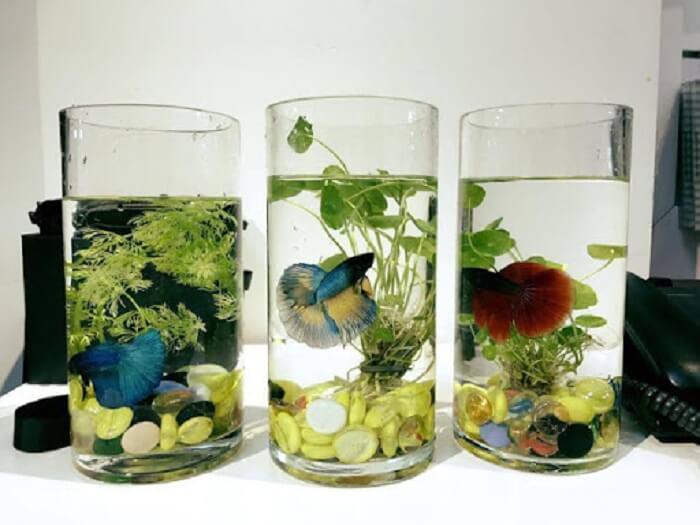 Bể cá hình trụ độc đáo