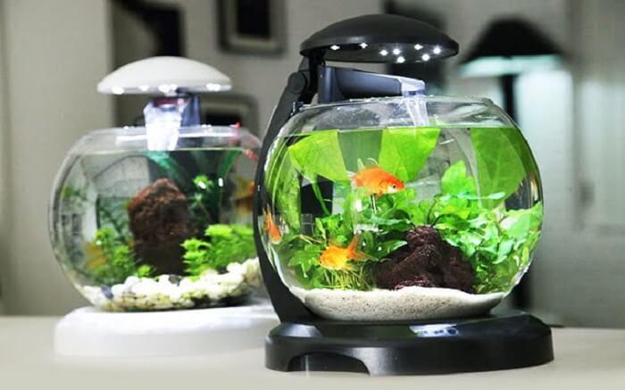 Bể cá mini tròn 3 trong 1