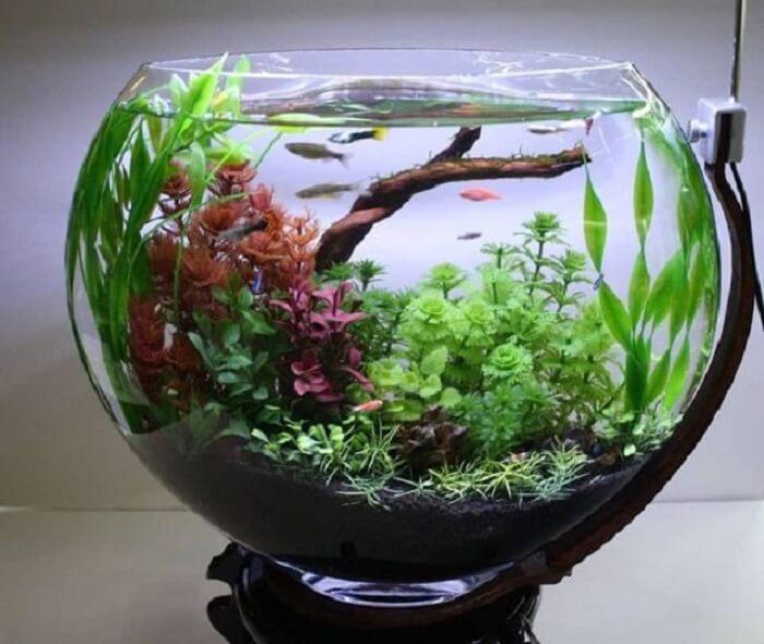 Bể cá mini hình tròn khá phổ biến