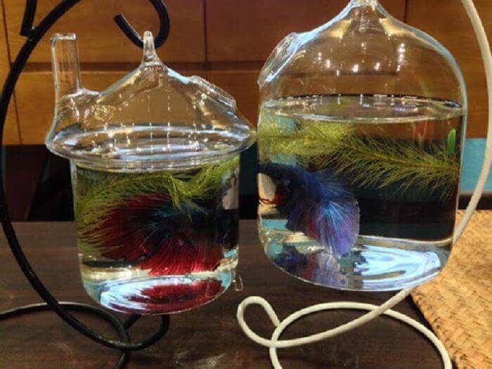 Bể cá mini dạng treo khá mới lạ và đẹp mắt