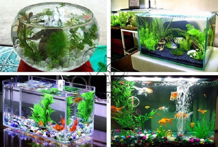 Bạn có thể thoải mái chọn loại bể nuôi cá 7 màu