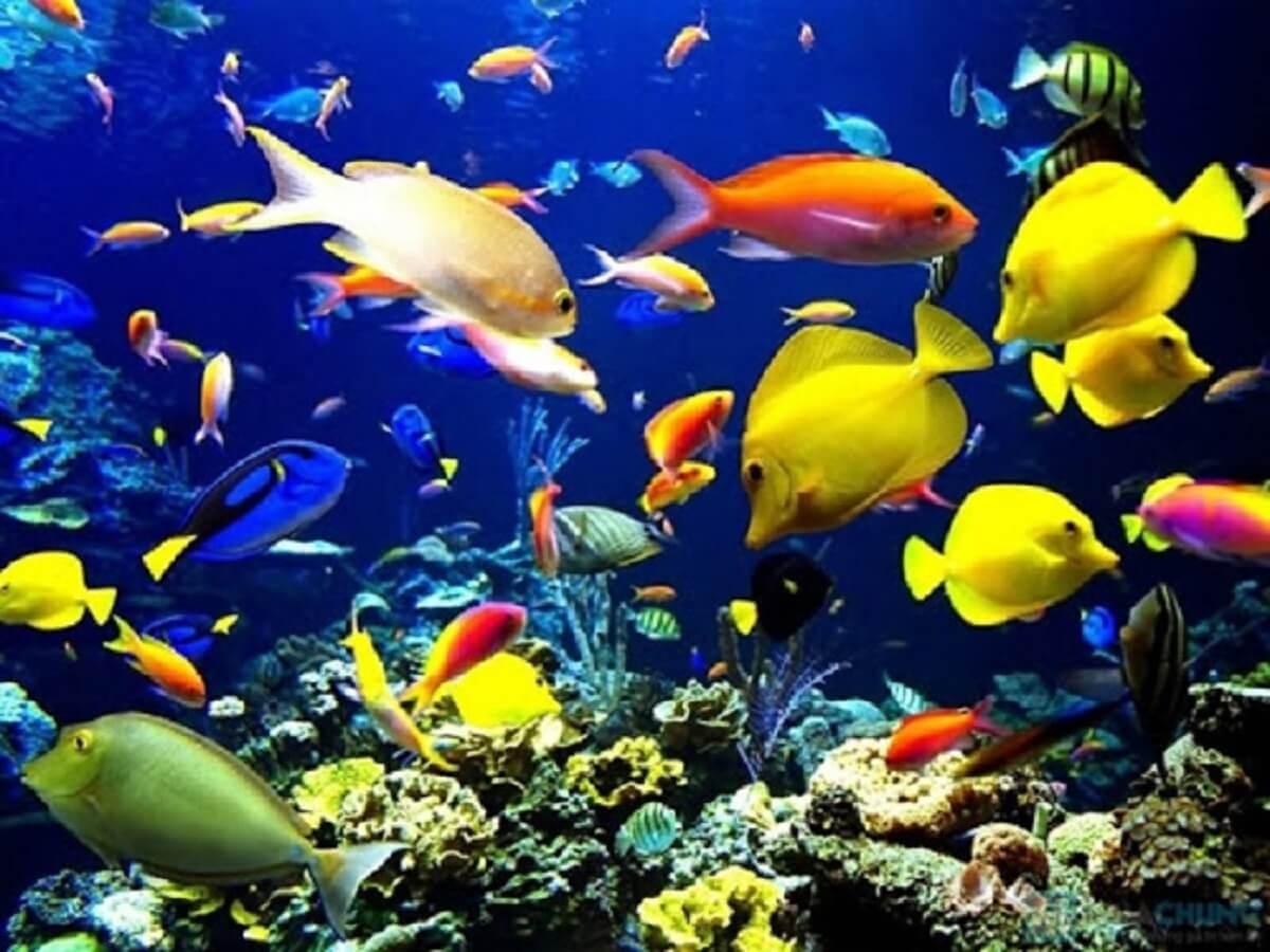 Top 15 loại cá cảnh dễ nuôi và dễ chăm sóc nhất hiện nay ở Việt Nam