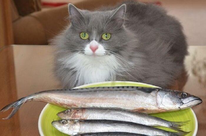 Thức ăn dành cho mèo trưởng thành 1 - 7 tuổi