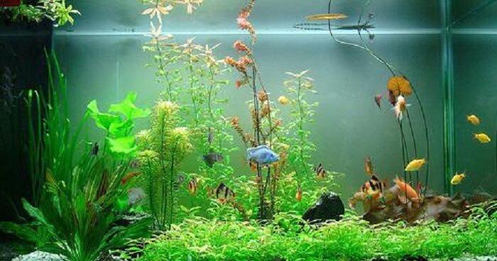 Có thể lắp đèn cho bể cá 7 màu để có thể cung cấp đủ ánh sáng hàng ngày cho cá