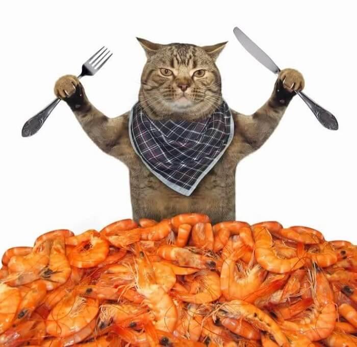 Mèo rất thích ăn hải sản