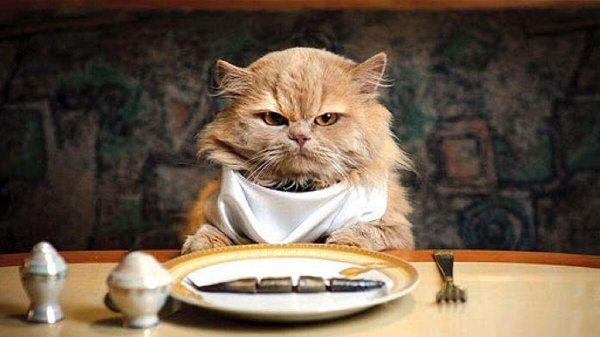 Nên cho mèo ăn gì là tốt nhất?